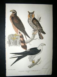 Alexander Wilson 1832 Hand Col Bird Print. Long-Eared Owl, Marsh Hawk, Swallow-Tailed Hawk